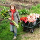 Jessica Gring, a young flower farmer at Jello Mold Farm; her arms are laden with stunning sunflowers and just-picked garen roses - bound for the Seattle floral market.