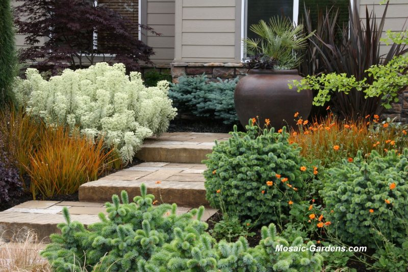 Small garden ideas from thomas rainer garden rant for Low bushes for landscaping