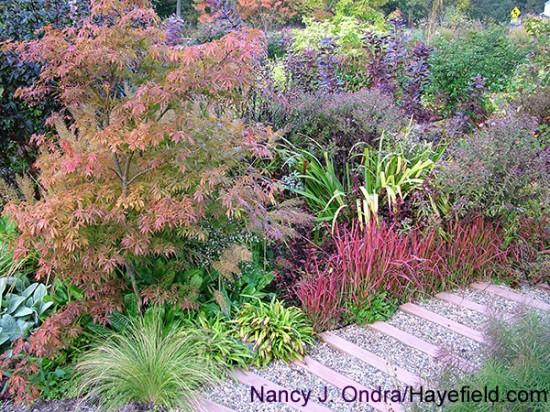 Ondra Front Garden at Hayefield mid Oct 11