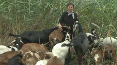 Martha Teichner with weed-eating goats.