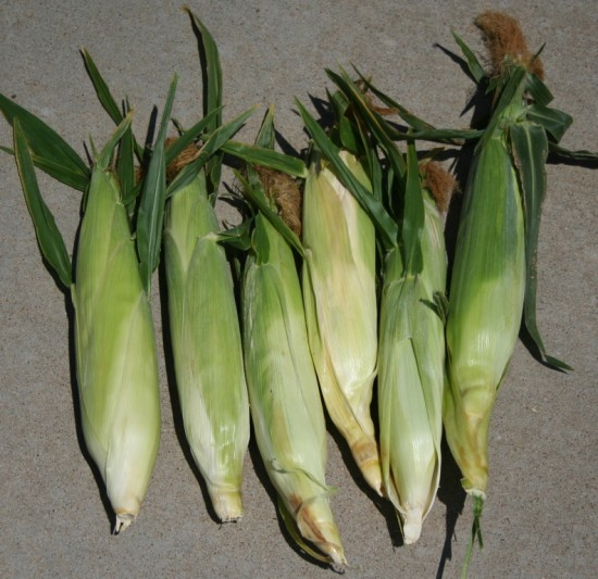 comp corn unshucked