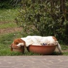 potted dog