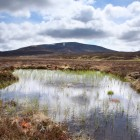 Peat bog in Scotland (Shutterstock)