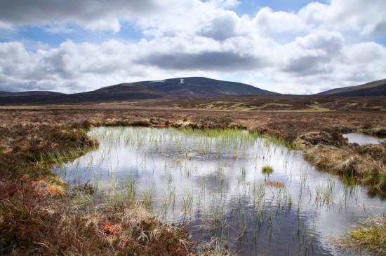 Peat bog in Scotland (Shutterstock)