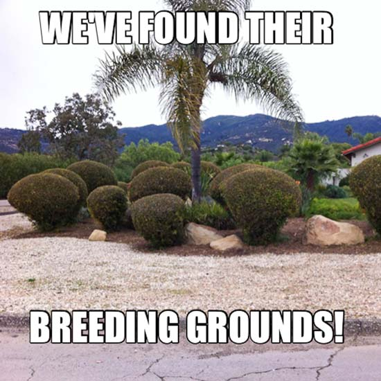 3Breeding Grounds Ed
