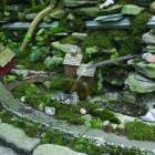 A tiny garden I like