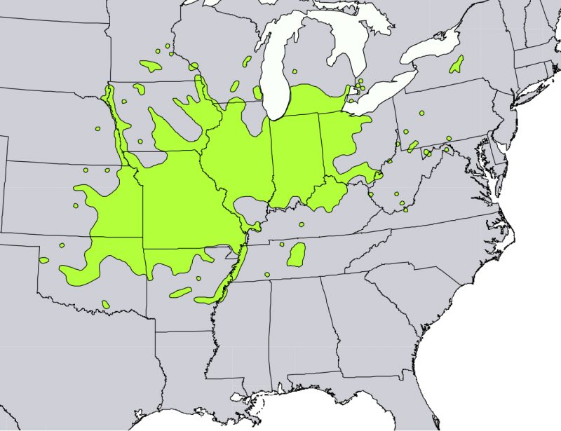 Distribution of Kentucky coffeetree