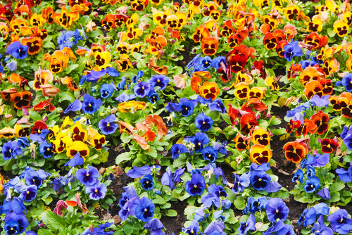 Bedding Your Plants | Garden Rant