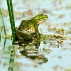 Frog courtesy of Shutterstock