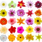 Flowers by Shutterstock