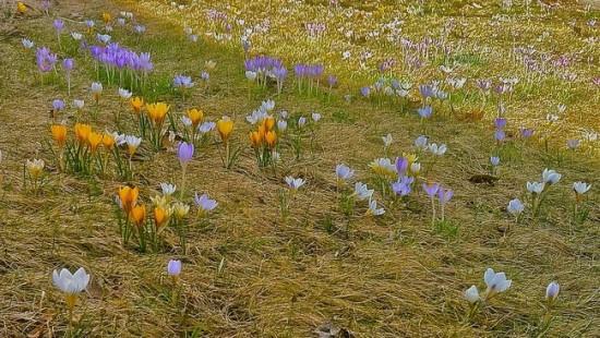 Biodiverse Lawn