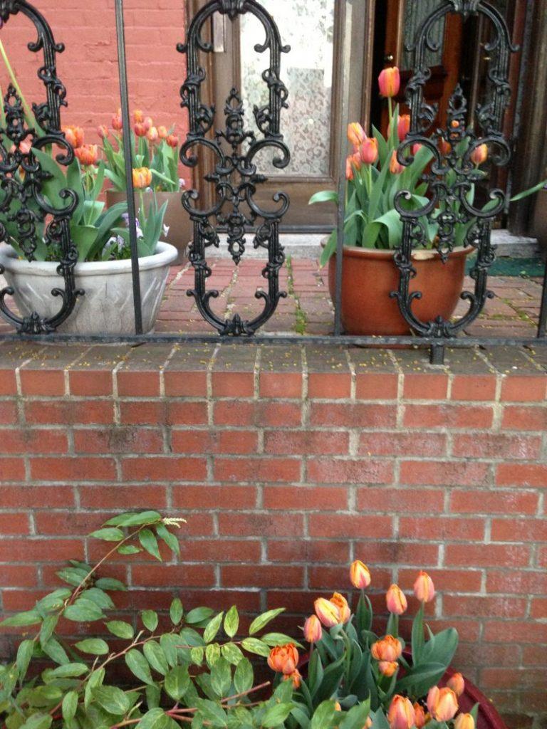 tulipsinpots2013