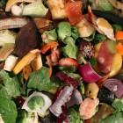compost shutterstock