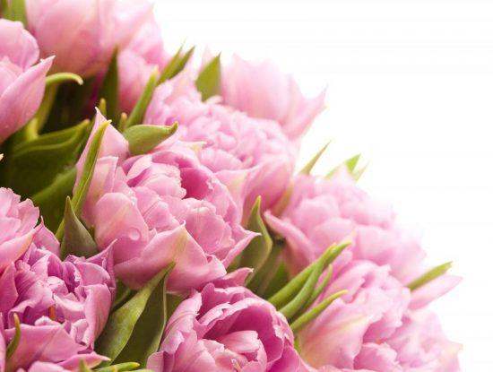 shutterstock tulips