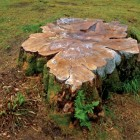 stump wiki