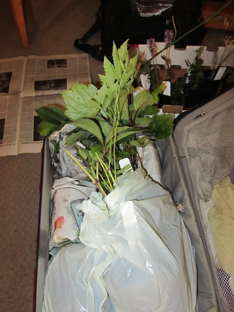 A Suitcase of Perennials and Dirty Clothes