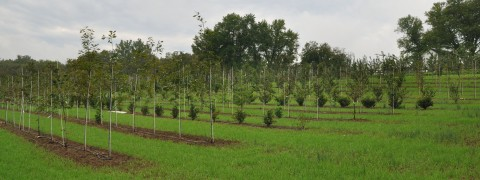 casey trees nursery