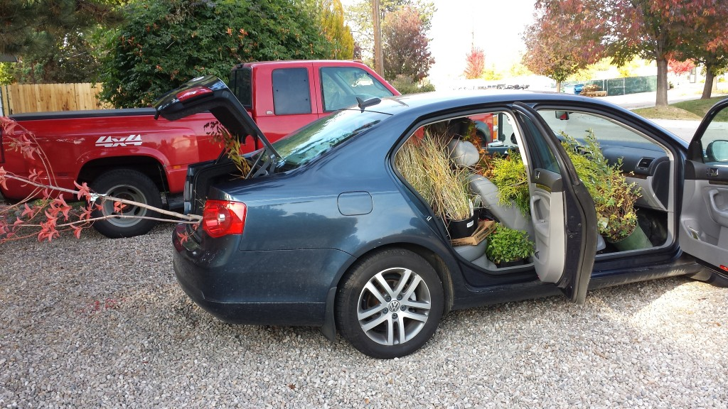 Just how many plants can be squeezed into this Jetta? Depends on how slowly I can drive home.