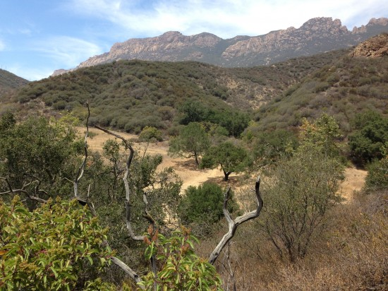 This is the dominant native plant community in Southern California. It is beautiful, but it is not a garden.
