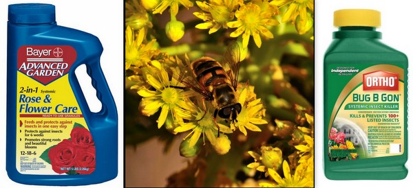 How to Stop Bee Killing Pesticides Start with the Box Stores