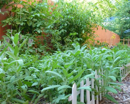 GardenSage21