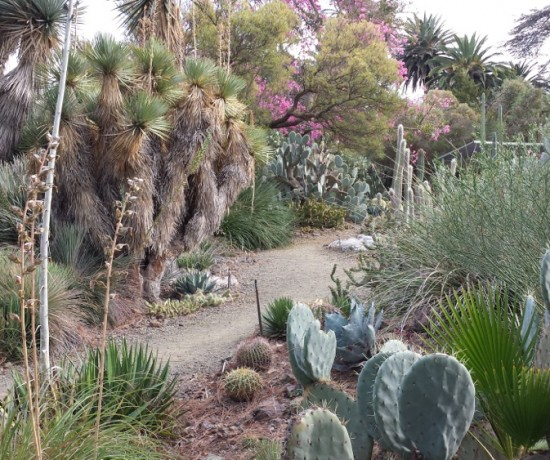 A recent visit to the 40-year-old, 3.5-acre Ruth Bancroft Garden, the first private garden added to the Garden Conservancy, reinforced the capacity of a stroll garden to provide mystery and exploration.