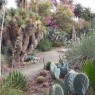 A recent visit to the 40-year-old, 3.5-acre Ruth Bancroft Garden, the firs