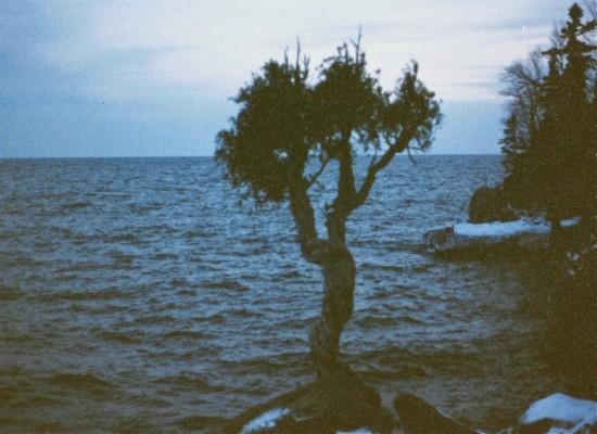 TreeRights1