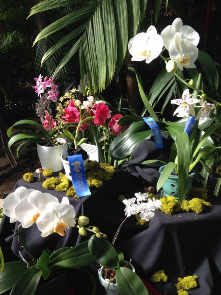 orchidshow