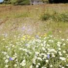 Irish countryside image courtesy of Shutterstock