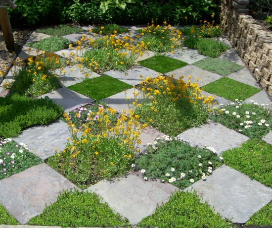 From Jim Charlier's garden: fun with the idea of a lawn