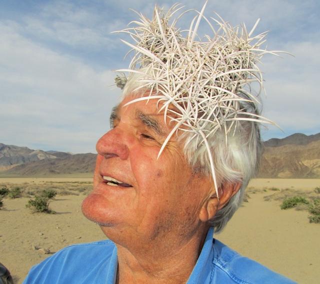 Bluemel Echinocactus polycephalus Racetrack Playa Death Valley 040814 1