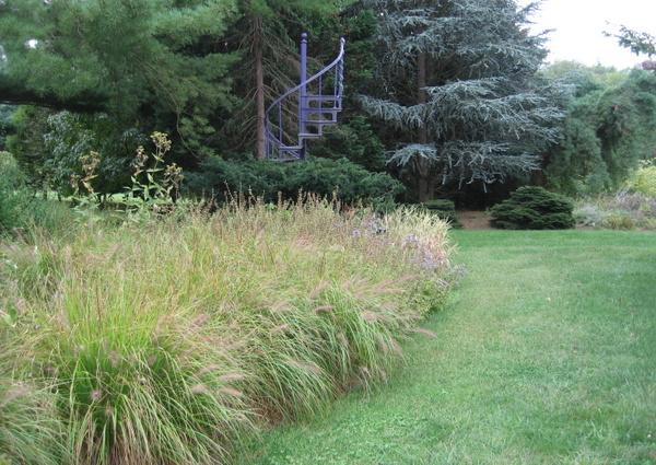 Grass borderLarge