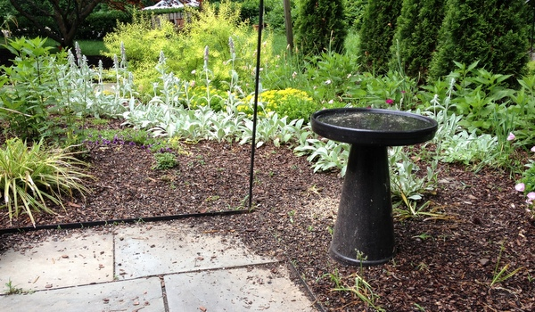 Garden Dilemma: Under the Bird Feeders | Garden Rant