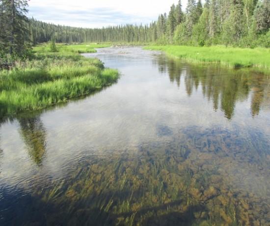 State Park near Denali, Alaska
