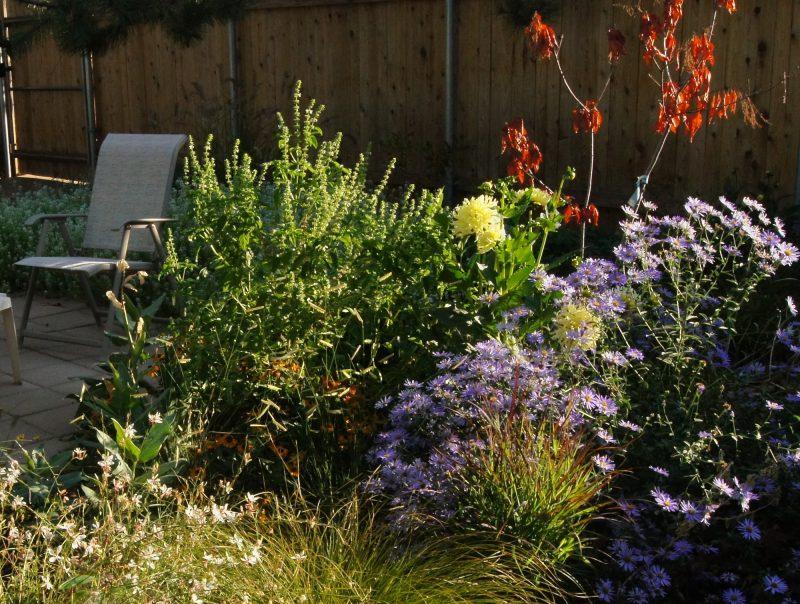 laissez faire garden design a long conversation with nature