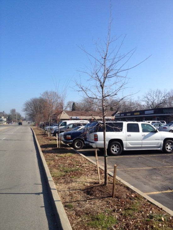 Brownsboro Road trees waiting on a settlement with the Kentucky Transportation Cabinet.