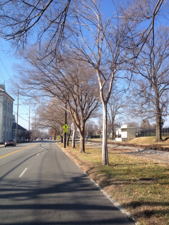 Trees close to the curb on Frankfort Avenue.