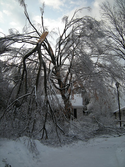 2009 ice storm on my Louisville street.
