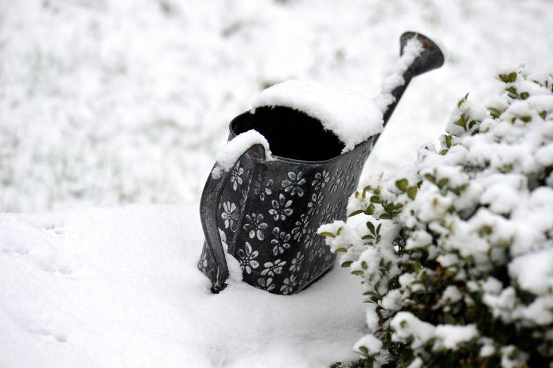 Snowy garden courtesy of Shutterstock