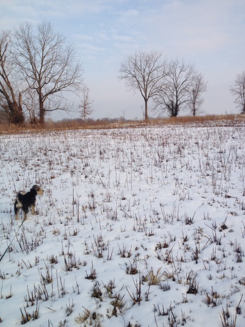 Rufus in the snow on January 24, 2015.
