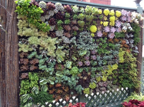 Green wall, full of succulents, at the Mary Livingston Ripley Garden.
