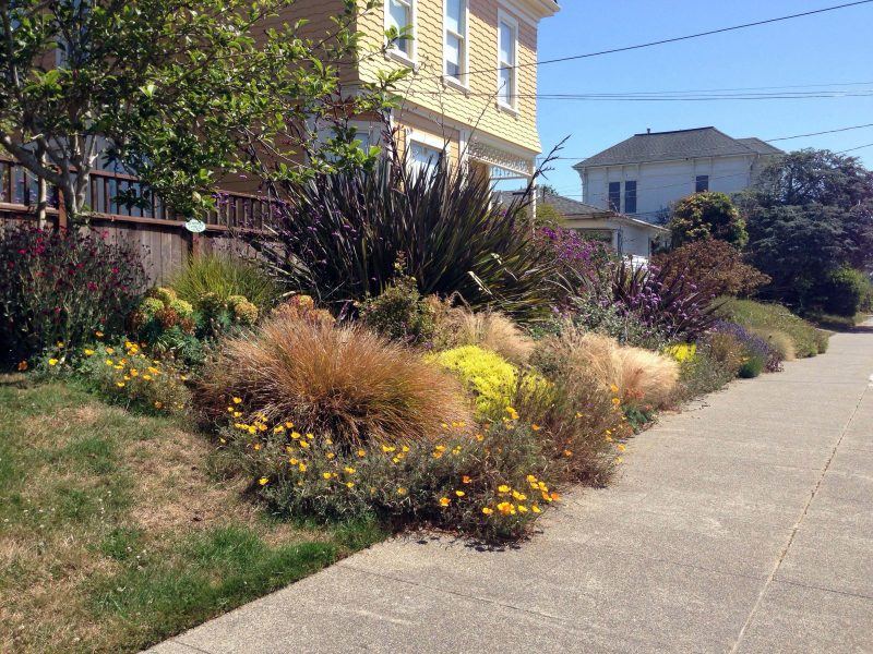 front yard garden no water - Large Garden 2015