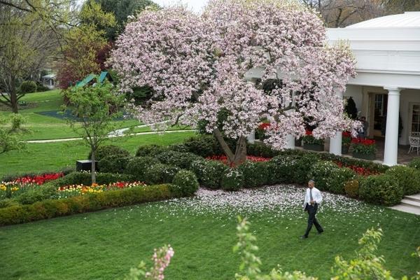 rose garden3