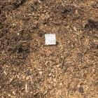 From the Majewski compost site