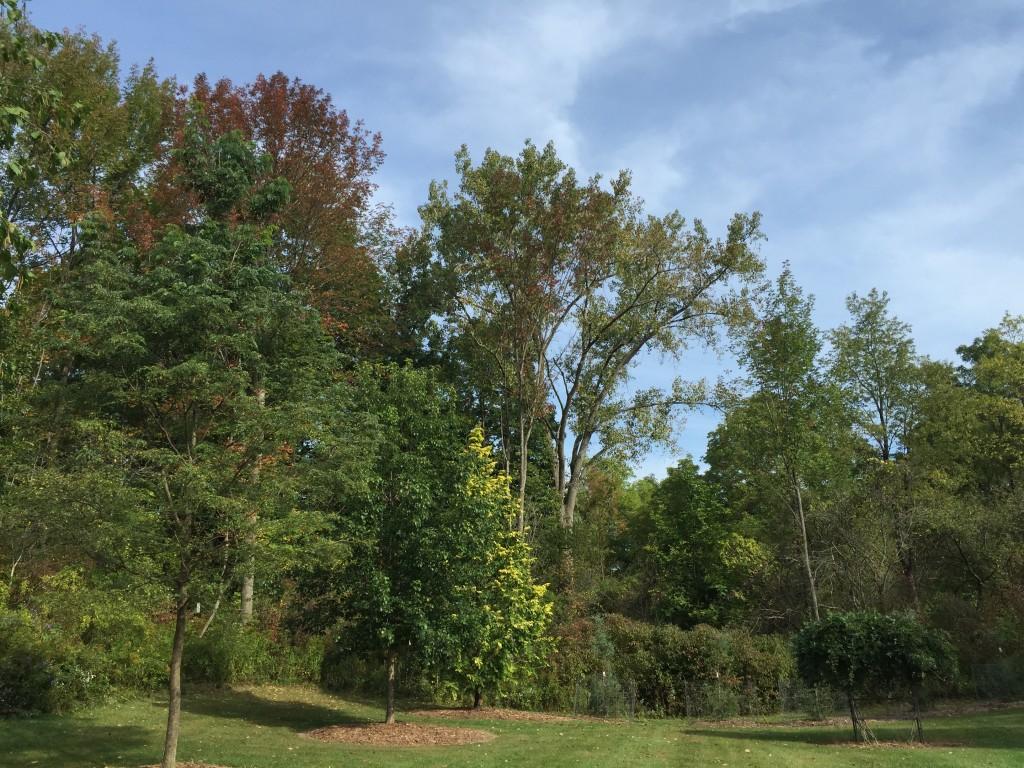 Draves arboretum (very partial)