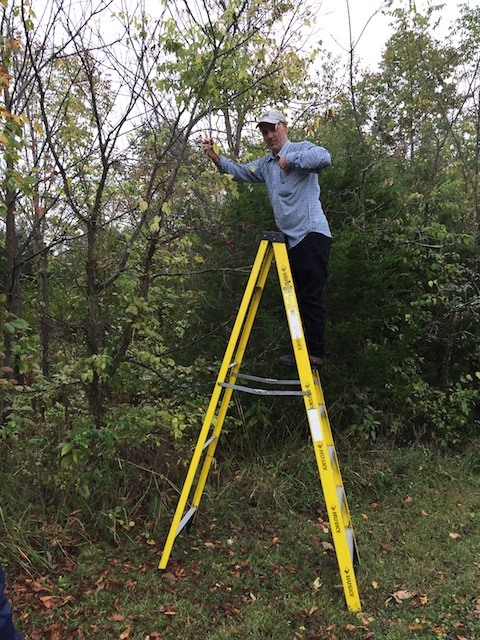 Julian Campbell climbs the ladder for seed of the dwarf hackberry. Mike Hayman photo.