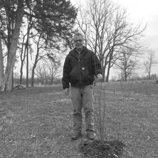 Newly planted spicebush, Lindera benzoin, in Salvisa, KY on March 2nd.