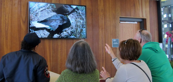 Arboretum visitors, like everyone, are mesmerized by the eaglets.