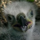 eagle4-23